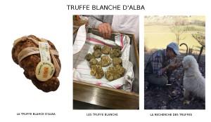 TRUFFE BLANCHE D'ALBA