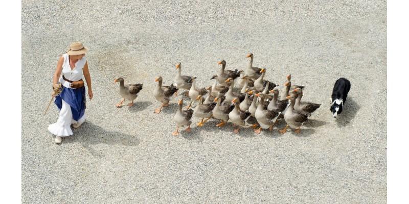 Duck Specialities